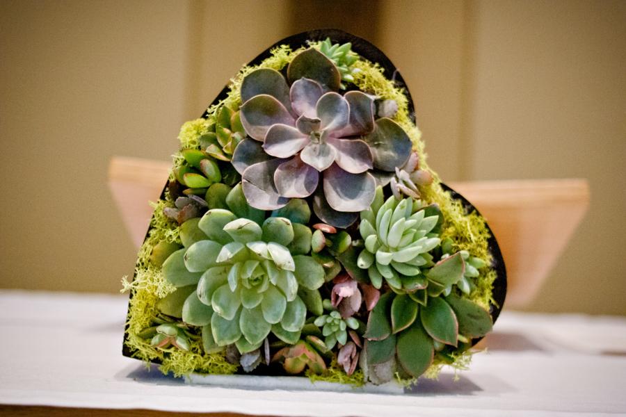 Heart shaped succulents - beautiful decor