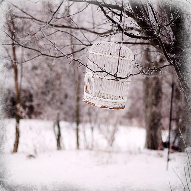 The Birdcage #winter #minnesota