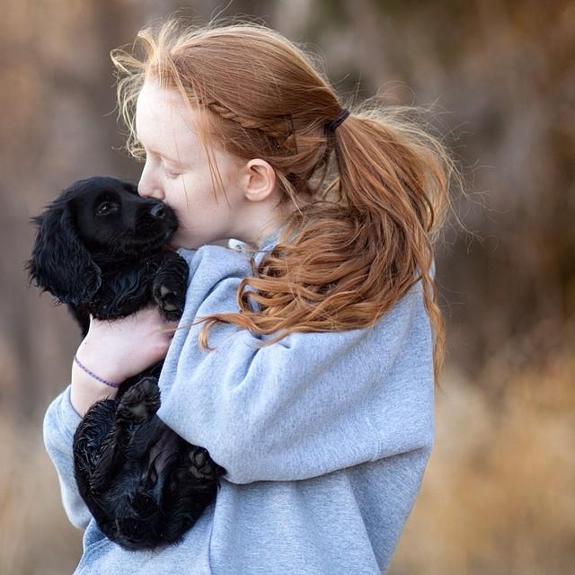 Puppy Love! #puppies #cockerspaniel #dogs #ps_studio #love