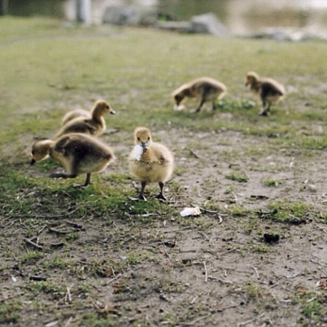Babies. Instant polaroid #023 #mamiya645 #80mmf/1.9 #spring #owatonna #minnesota #paquinstudio #filmisnotdead #fujifilm