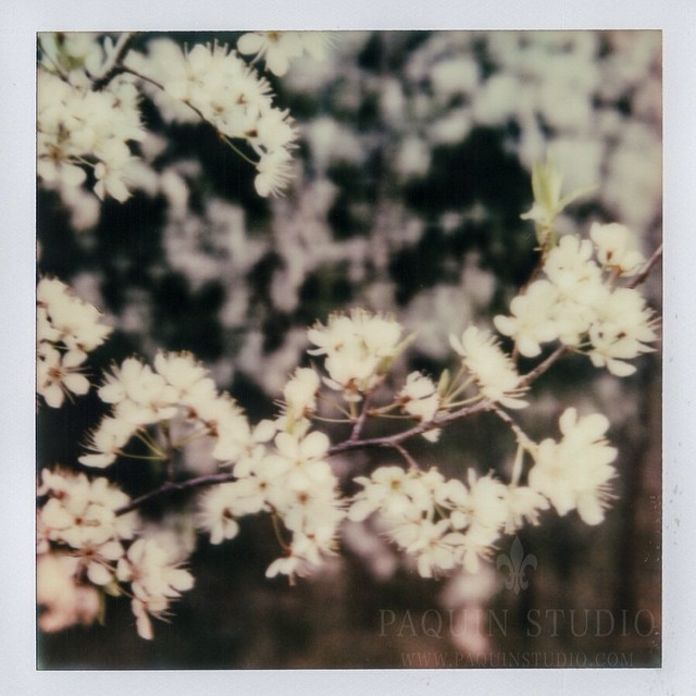 Blossoms in