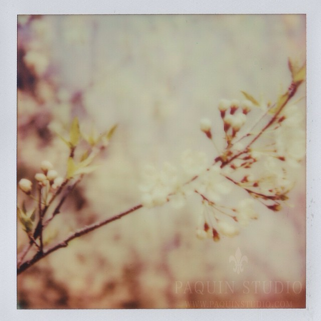 Polaroid Pastels in Spring