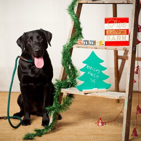 Atticus had his holiday card picture taken