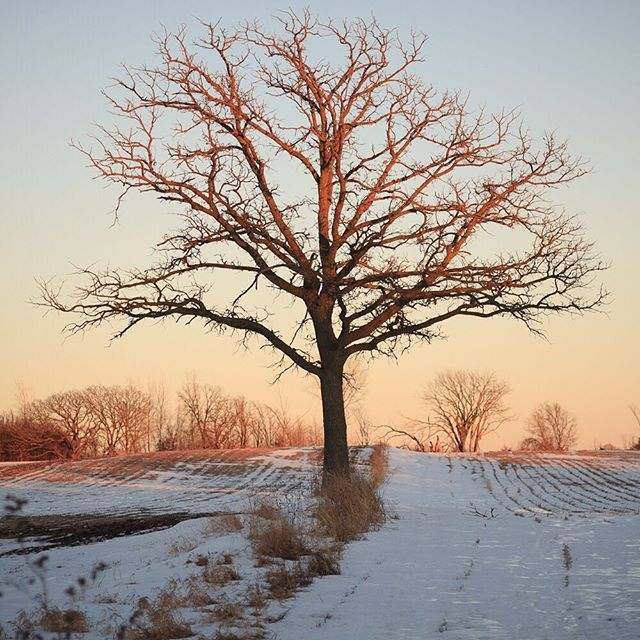 Clinton Falls tree along a country road