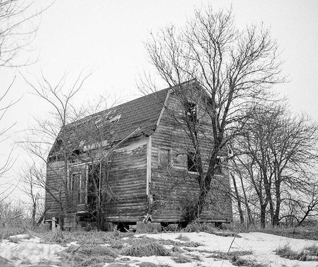 Prairie roots - gnarled through time