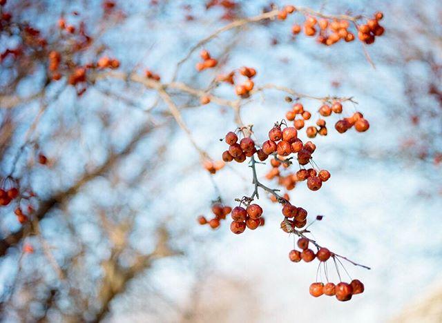 fresh frozen fruit - -
